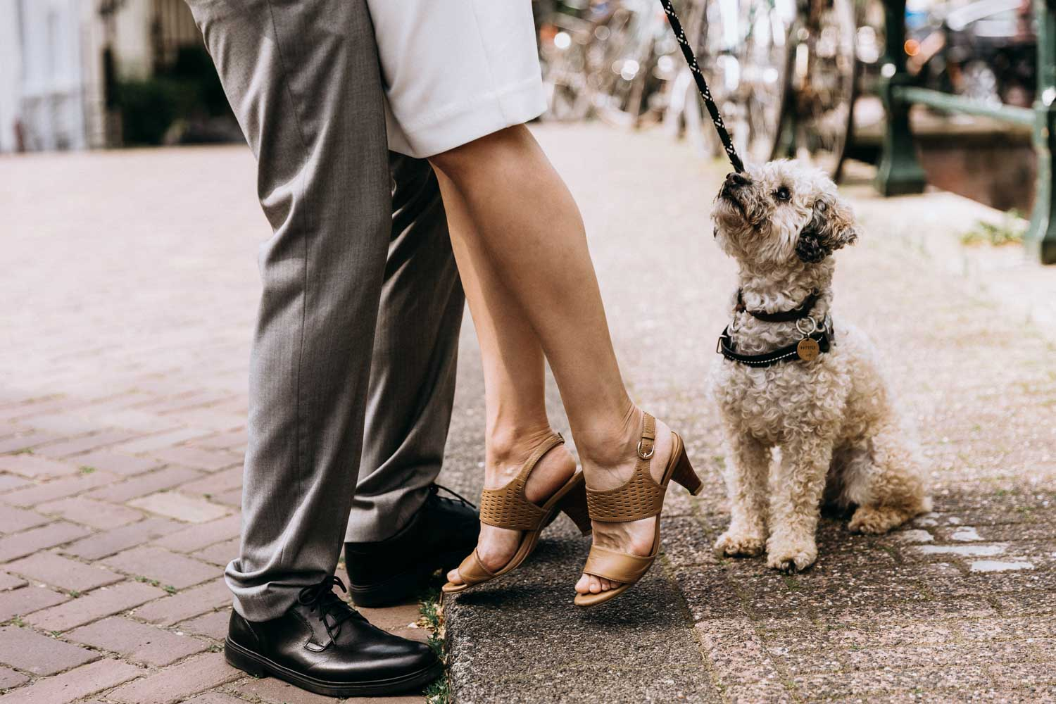 Beautiful couple with a dog walking and posing for the photographer at the wedding photoshoot with a dog in Amsterdam